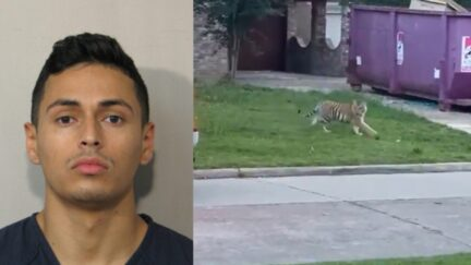 Victor Hugo Cuevas pictured in mugshot next to tiger that was on the loose in Texas